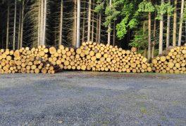 Prodej dřeva z městských lesů Nové Městě na Moravě – srpen 2017